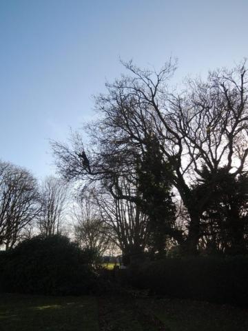 oak-felixstowe