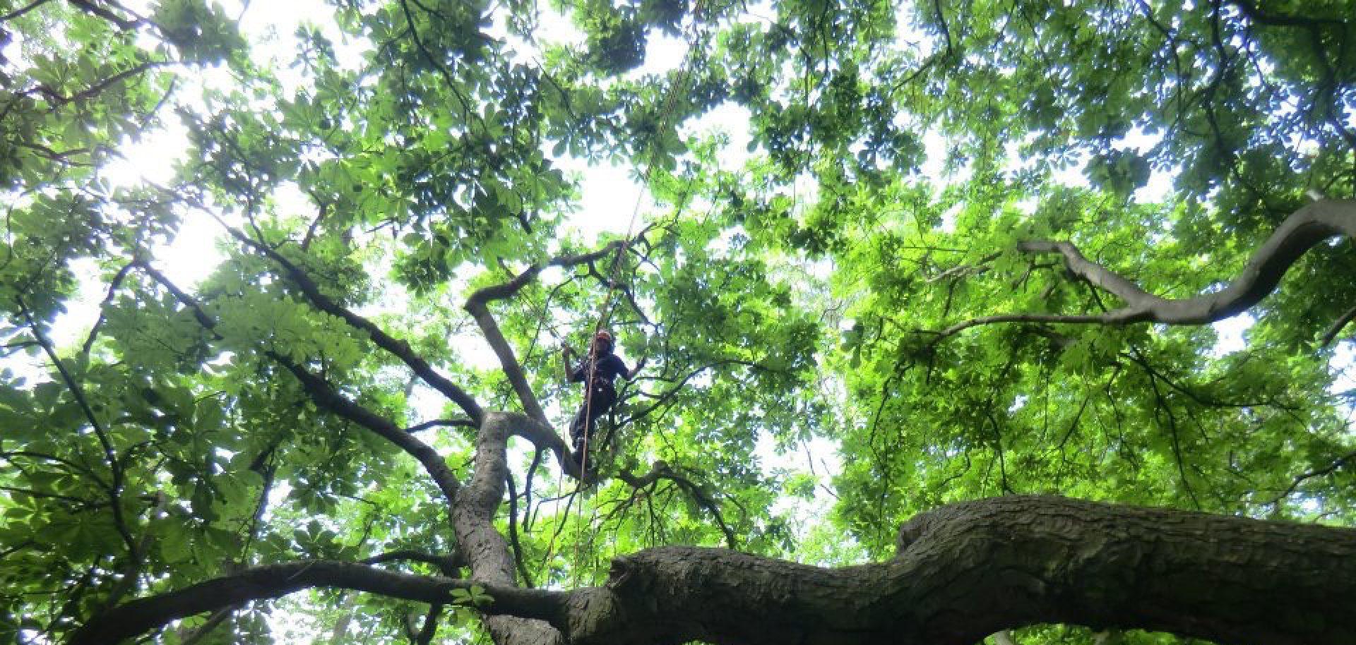 Ginkgo Tree Surgery Ltd